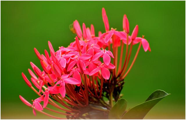 A bunch of red fleurs! [DSC_3902]