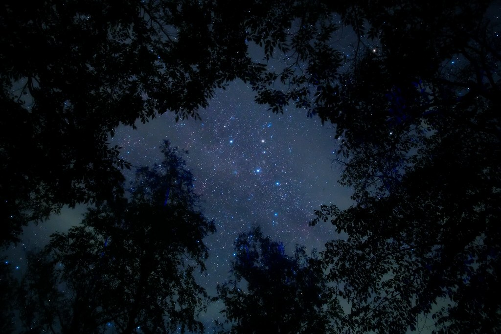 In a forest, Cassiopeia.