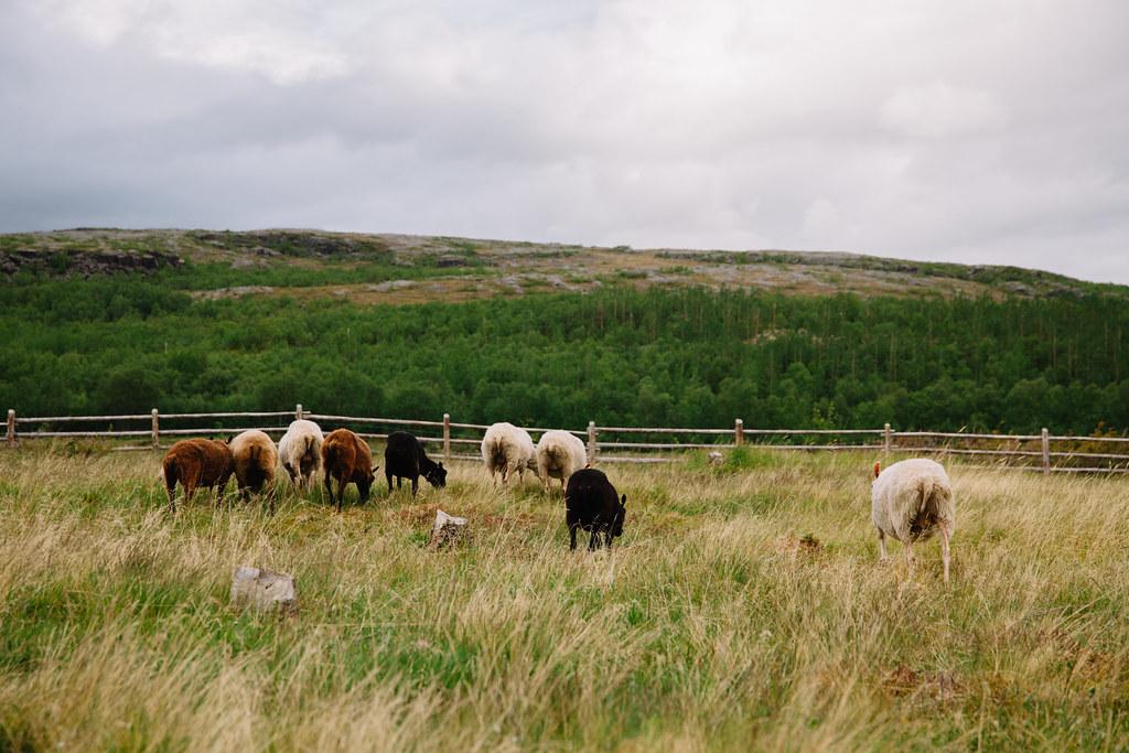 Välimaa lammaspaimen