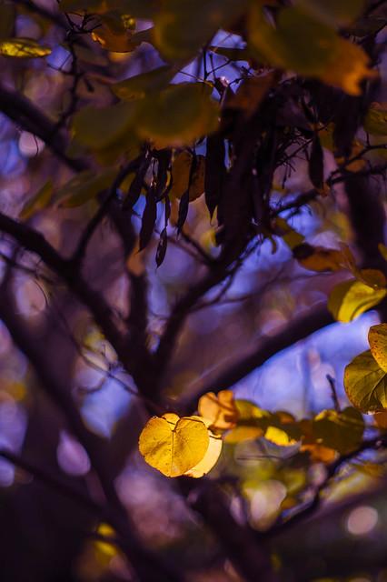 Purple Haze (& a dab of gold)        (_ADL6261)