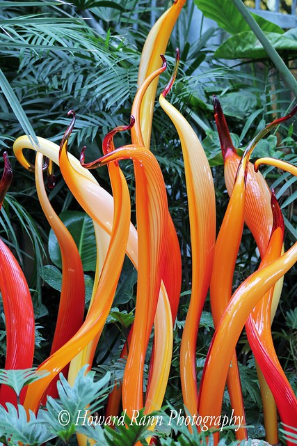 Phipps Conservatory  (15)