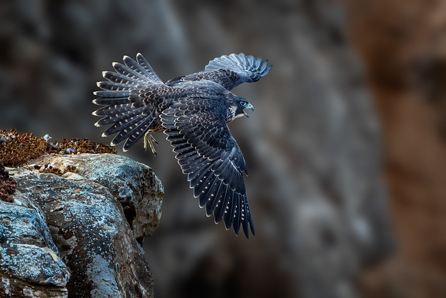 Flared Tail Take-Off