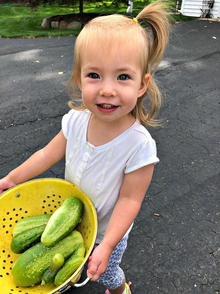 clara's cucumbers