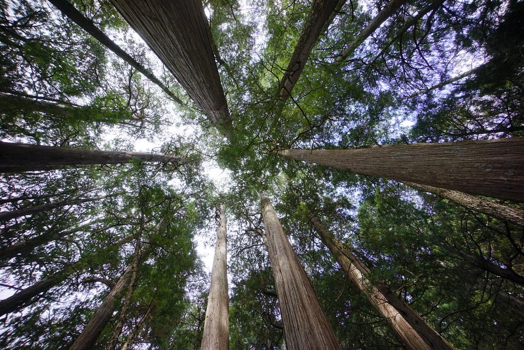數百萬檜木和原始森林消失的真相是什麼?無聲的台灣山林也需要轉型正義。攝影:傅志男 p.2~3