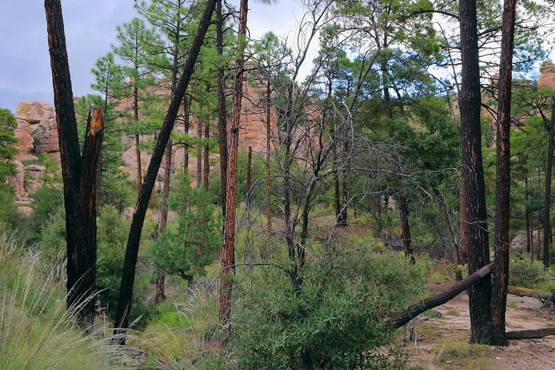 IMG_3355 Natural Bridge Trail