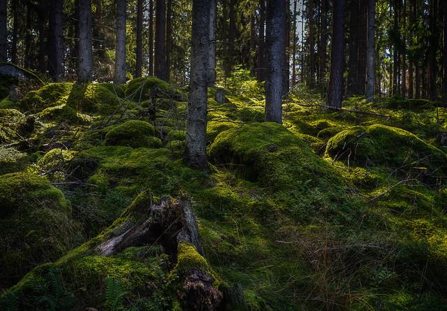Mossy woodland. Explored
