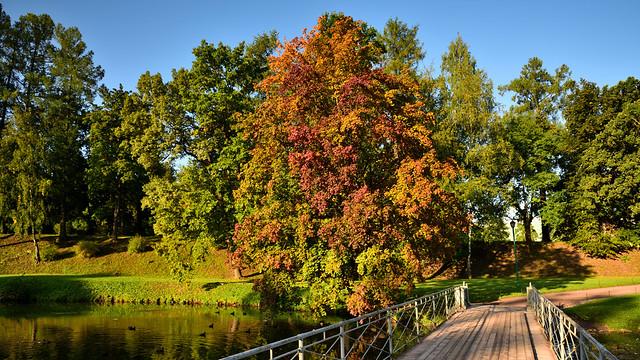 Maple. Bridge to the park on White Lake.