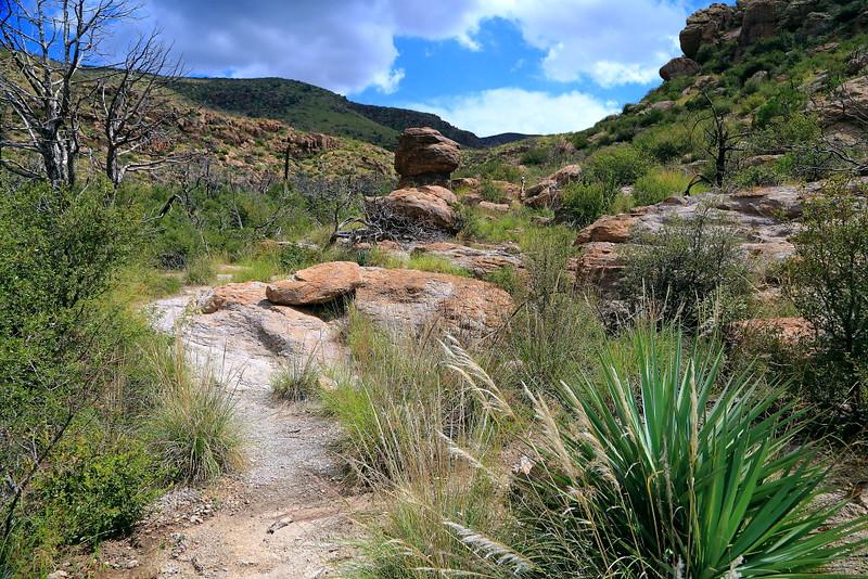 IMG_3463 Natural Bridge Trail
