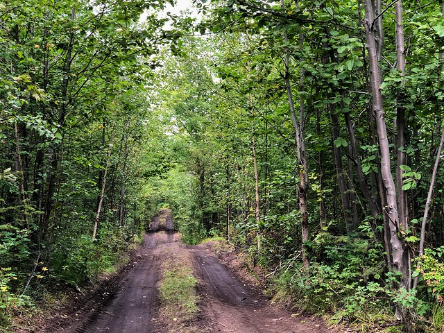 Bosque camino al Tolbachik en Kamchatka (Rusia)