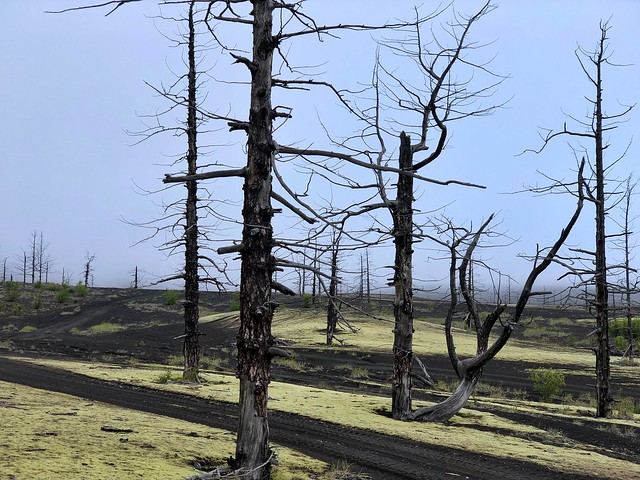 El bosque muerto (Tolbachik, Kamchatka)