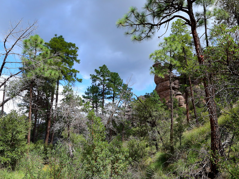 IMG_3441 Natural Bridge Trail, Chiricahua National Monument