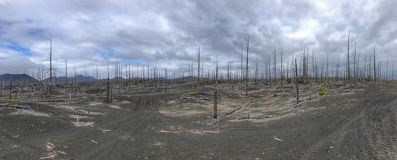 Foto panorámica del bosque muerto provocado por las erupciones del Tolbachik (Kamchatka, Rusia)