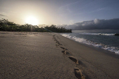 morning walk morningwalk beach sun sunrise dawn sand sea caribbean barbados sunlight sunrays palm palmtree steps footprints footsteps landscape nature outdoor sky blue water