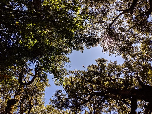 Fly by. (Zoom in on the opening at the center.) Castle Rock State Park, Santa Cruz Mountains, Santa Cruz County, California.