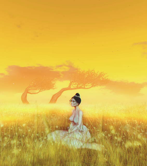 lost in a peach meadow