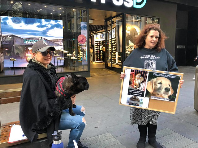Stop the dog & cat meat trade with special focus on South Korea – August 10, 2019 organized by Francie Campbell