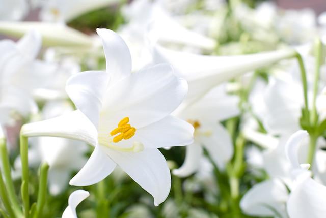 Pesona Bunga Trimukti