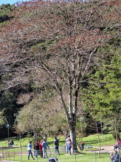 pessoas que gostam de árvores