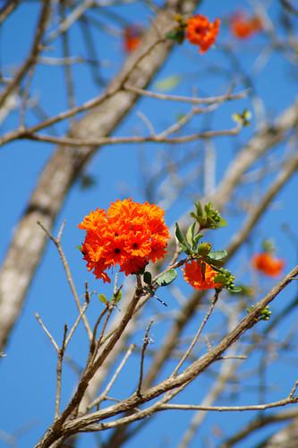 Tree with Flowers @ Uxmal