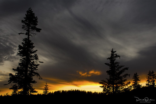 sunset dusk twilight clouds yellow orange gray trees forest silhouette sugarpine redfir sodaspringsroad serenelakes tahoenationalforest nationalforest placercounty sierranevada sierra mouuntains northerncalifornia california
