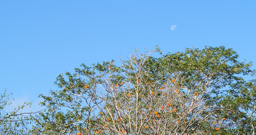 The Moon above Uxmal