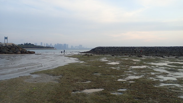 Seagrasses at Kusu Island