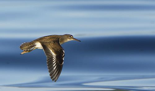 Speedy Flyby
