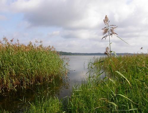 juglas lake irina galitskaya galterrashulc jugla rīga latvija latvia riga lettland landscape nature flora grass summer water clouds sky forest beach