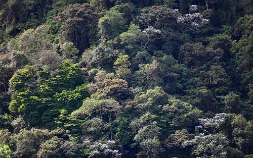 intagrivervalley landscape trees ecuador andes