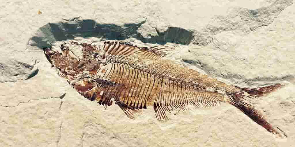 les-premiers-animaux-multicellulaires-étaient-canivores