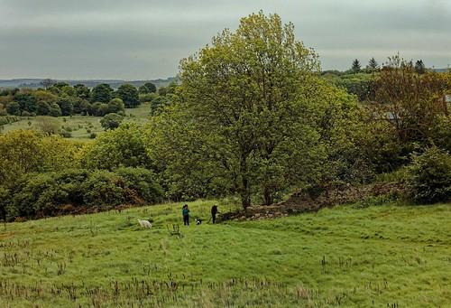 édimbourg ecosse craigmillar château environs campagne nature arbres herbe prairie nuages personnes chiens vuedepuislechâteau paysage panorama