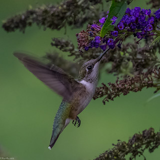 Sipping nectar
