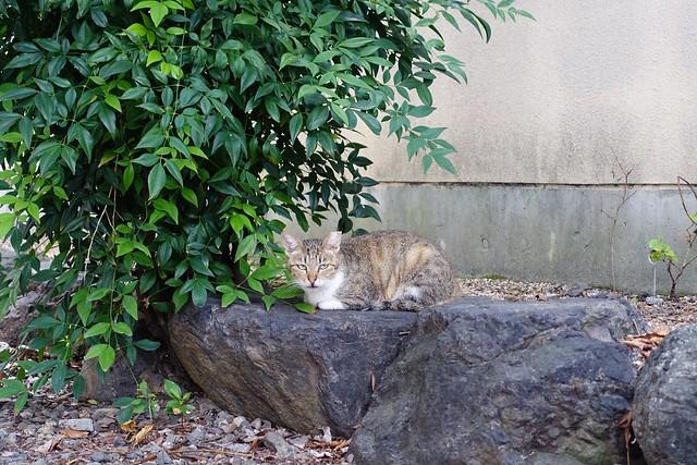 Today's Cat@2019-08-31