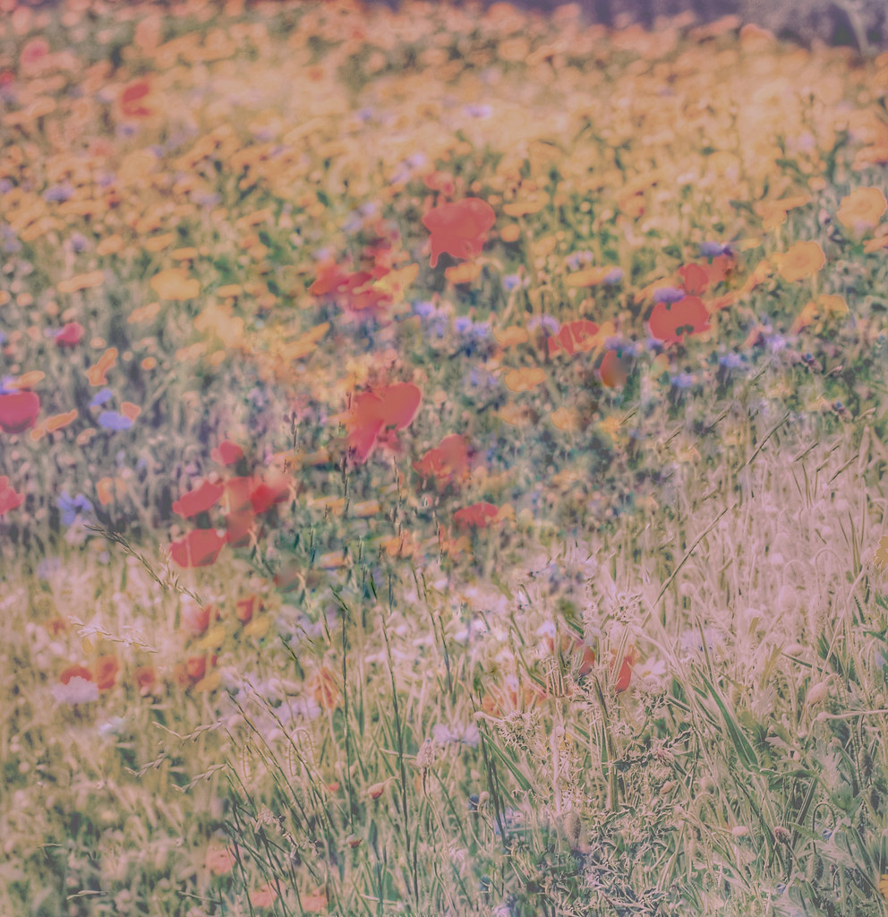 Wildflowers fading away as the days grow shorter