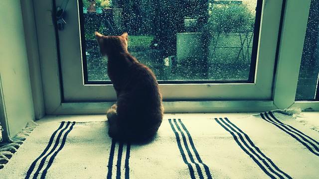 'Raindrops'   #cats #cat #catworld #love #iloveyou #samsungphotography #catphotography #catstagram #beautiful #closetoyou #猫好きさんと繋がりたい #インスタント #猫の写真 #今日の猫 #私は猫が大好きです #猫の世界 #catphotography #heavenly #samsunggalaxys9 #softtones