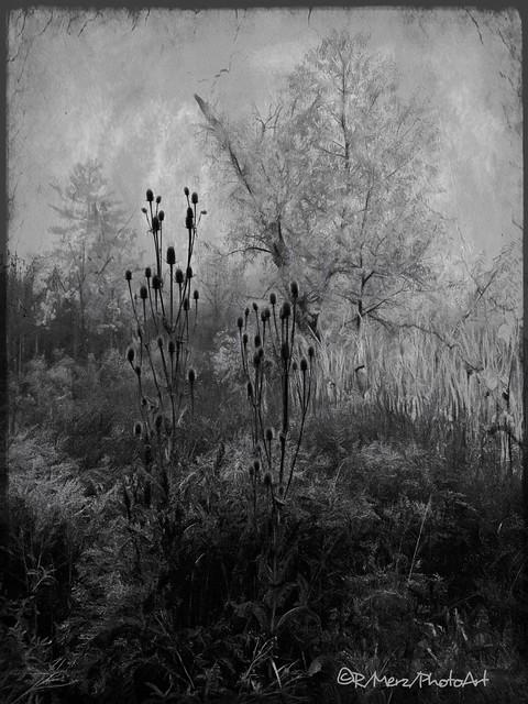 Dawn Greyness