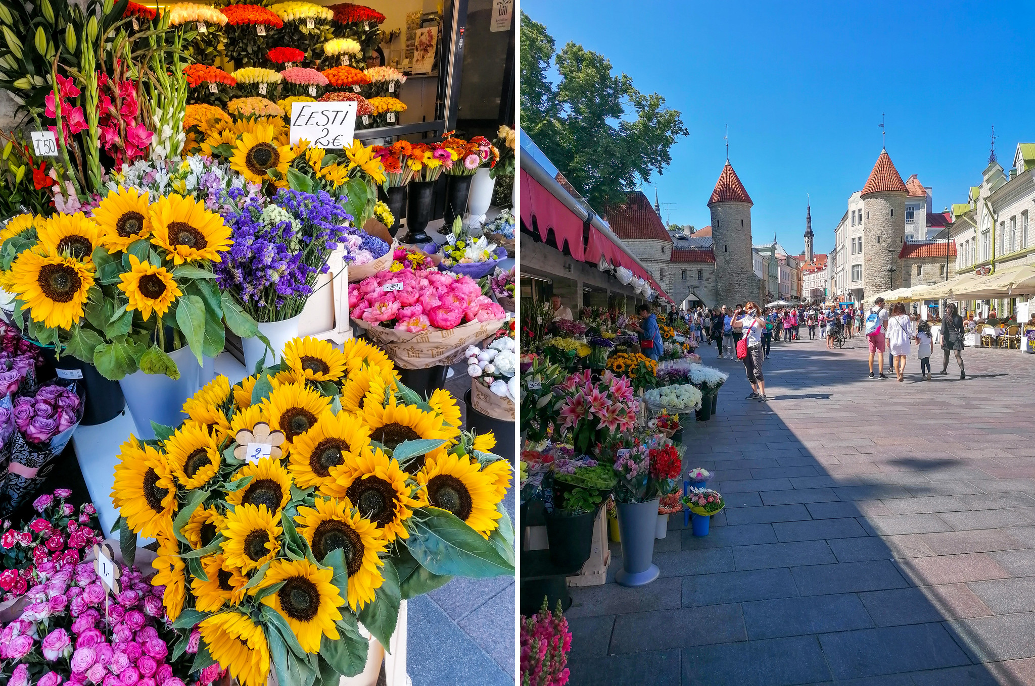 Tallinn-flowers
