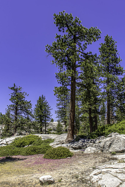 Sierra Nevada Forest