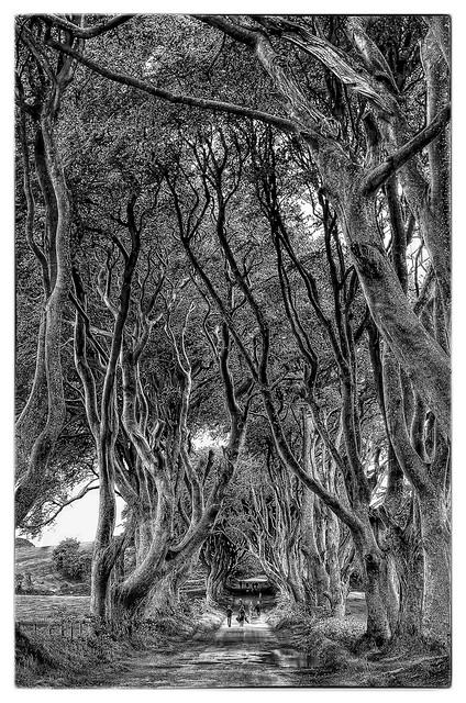 Bregagh Road NIR - Dark Hedges 05