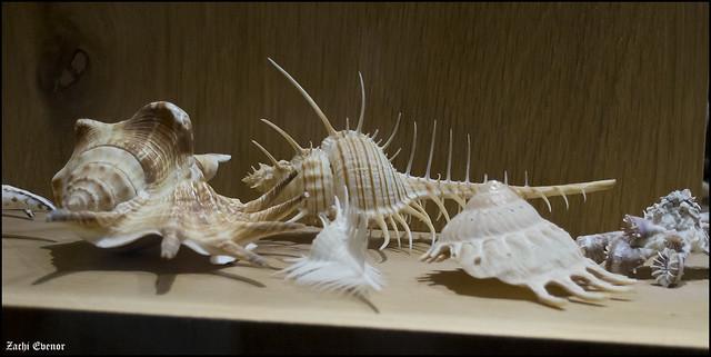 Aquarium Israel 2019-07-27 IZE-598