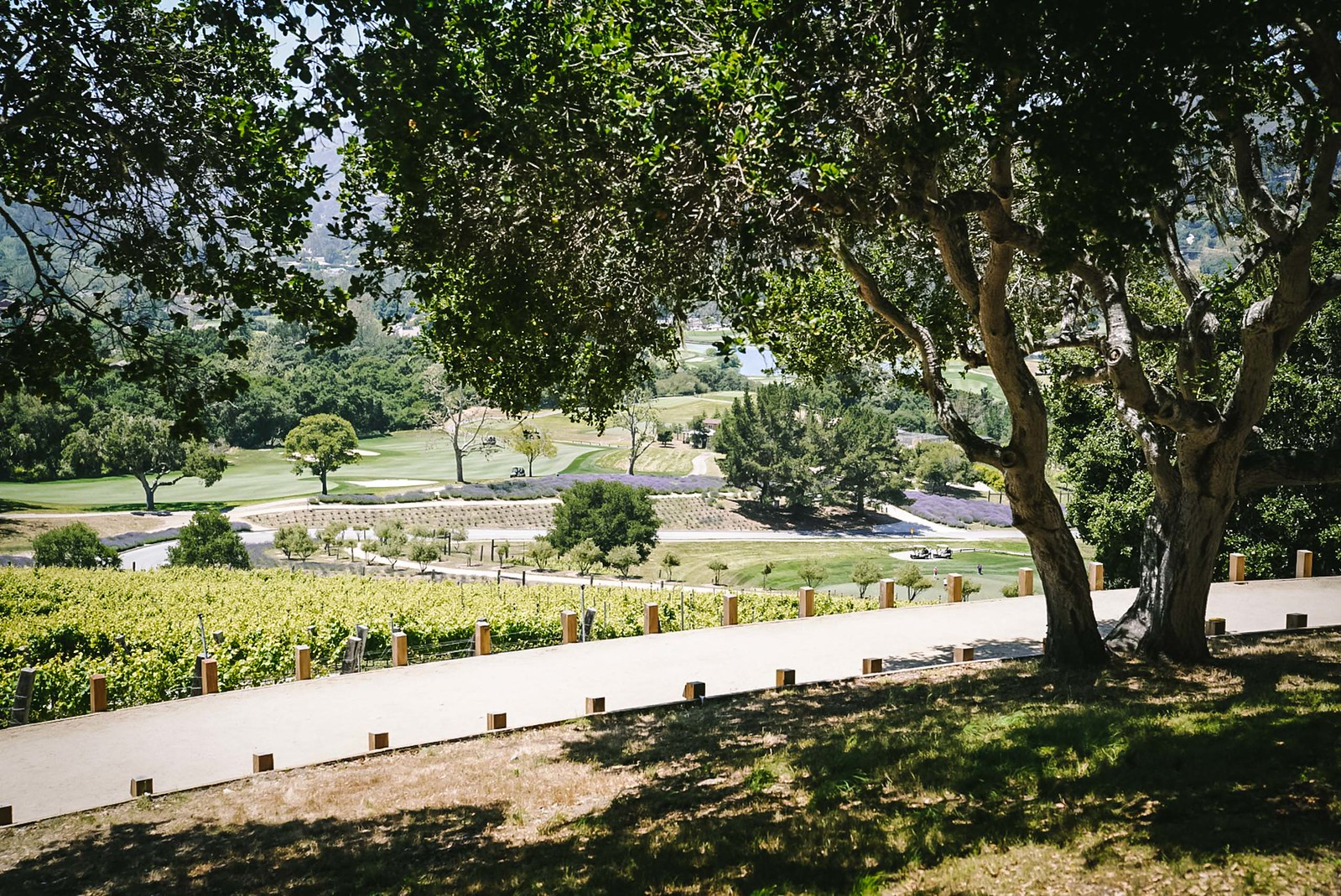 Carmel Valley Ranch review