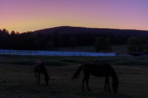 sunset color horse field shadow summer serene peaceful canon6dmarkii leominsterma