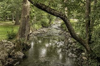 stream in algonquin park