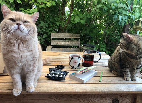 caturday with books, tea and vegan candy, august 31, 2019