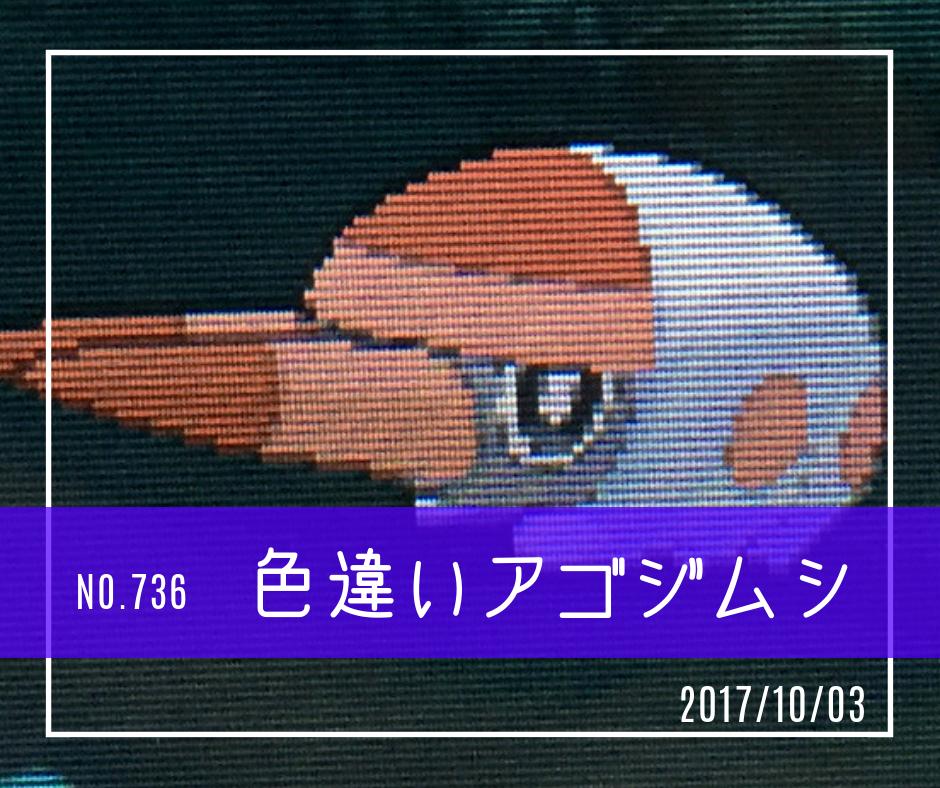 ic736(色違いアゴジムシ)