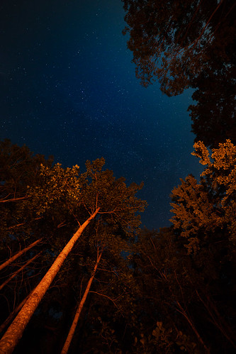 trees summer sky up vertical wisconsin night stars outdoors midwest unitedstatesofamerica nopeople nightsky crivitz canoneos5dmarkiii governorthompsonstatepark samyang14mmf28ifedmcaspherical