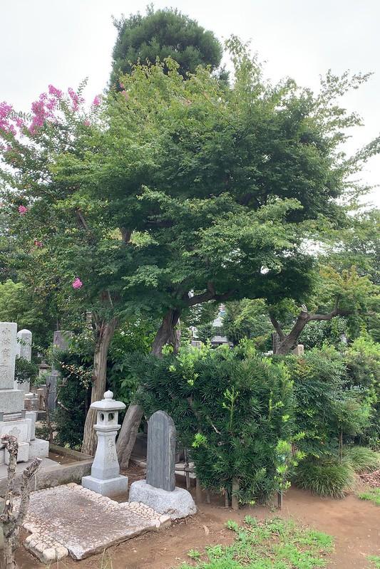 雑司が谷霊園永井荷風の墓