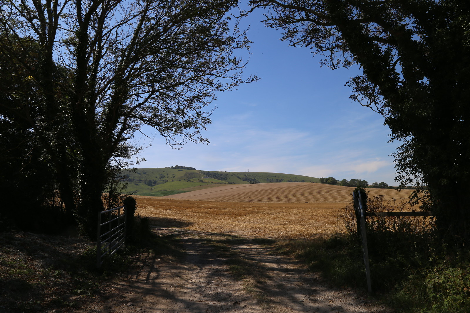 Field and South Downs - Firle