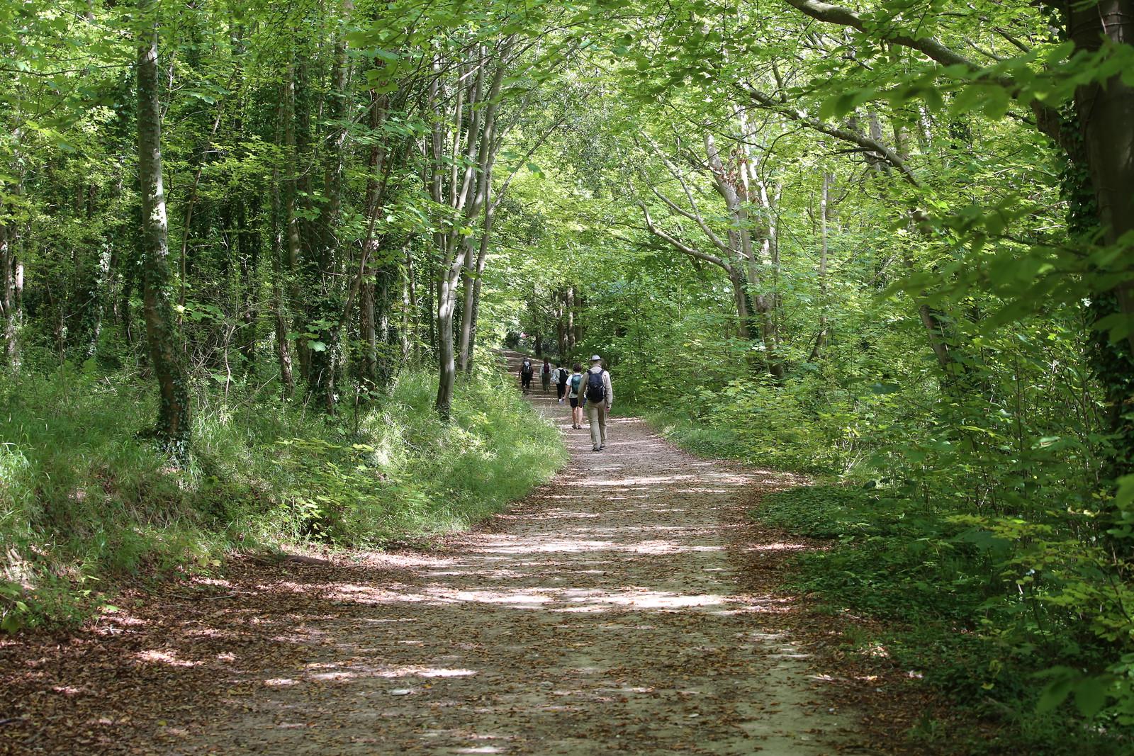 Shady wood walk - near West Dean