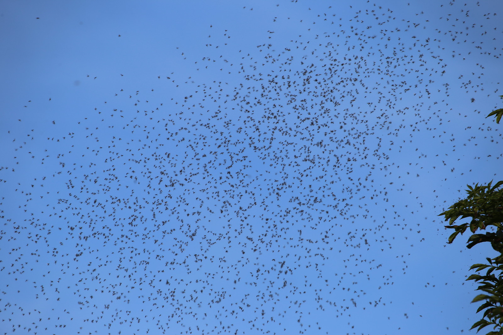Swarm of flying ants - Cuckmere Haven